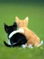 kitten_hug-14513
